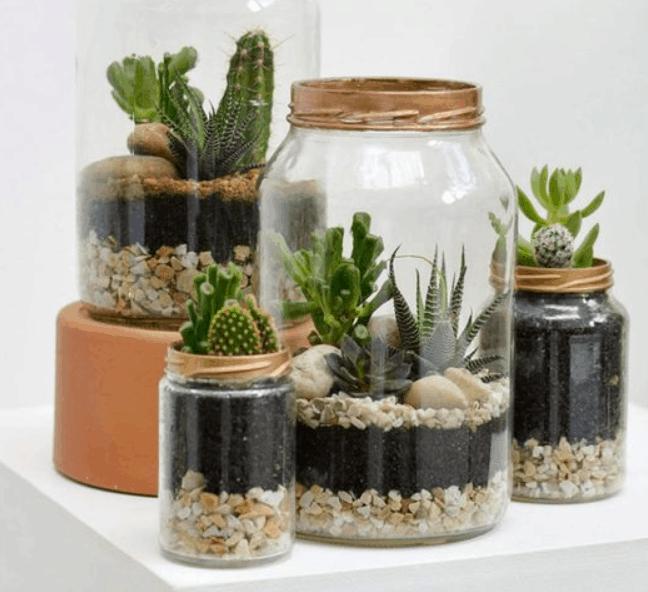 terrarium tanaman hias gift